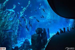 Big Blue Screen (Poema del Mar) | by Alesfra