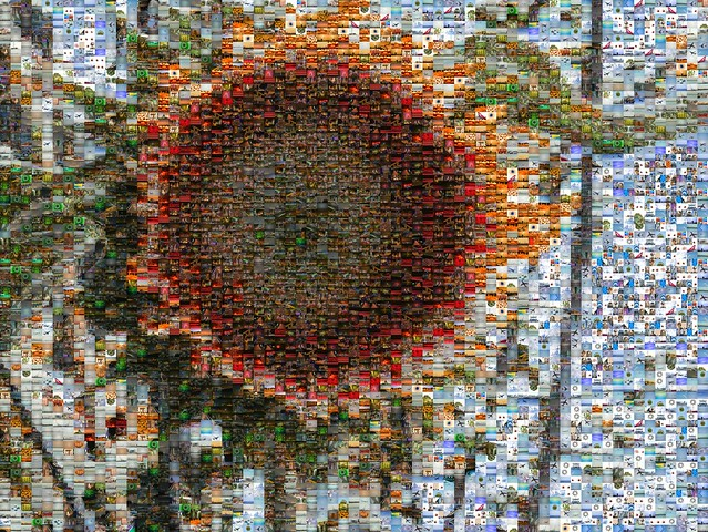 sunflower 5000 image mosaic