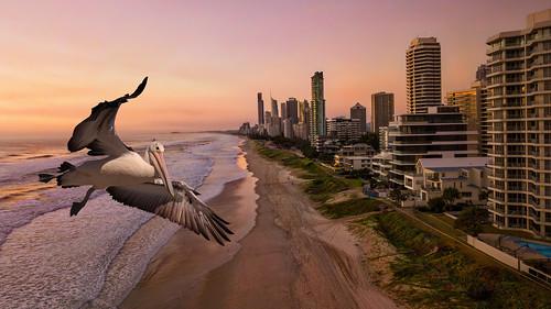 sunrise sea ocean water sky pelican mavicpro