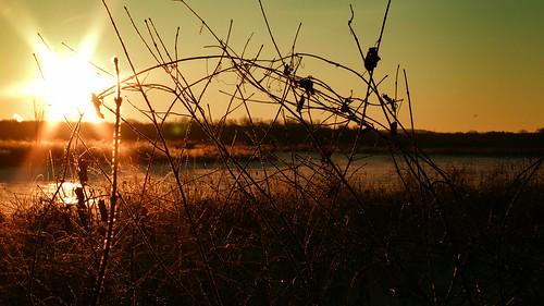 river thorns brush massachusetts pentax sunrise