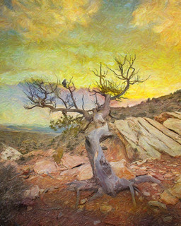 Shaman's Tree Painted | by ronphoto2009
