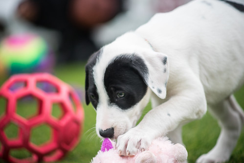 2018 Austin Pets Alive! Puppy Bowl | by J.Feinberg Photography