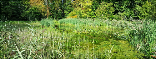 claudelina belgium belgique belgïe canon bruxelles brussel auderghem jardin garden jardinbotaniqueexpérimentaljeanmassart étang marais