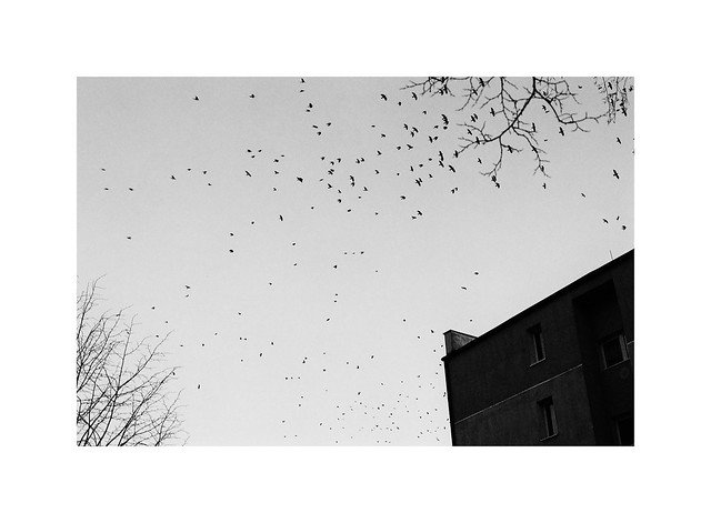22. Crows