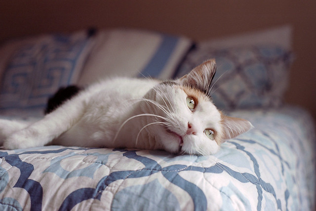 Lazing around...