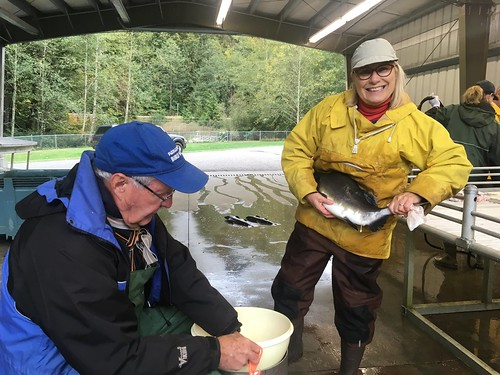 25. Rod and Ruth at Chilliwack Hatchery for pink egg take Oct  10.2017 | by mossomcreek3