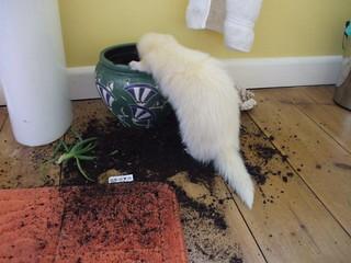 Wizzie loves to dig