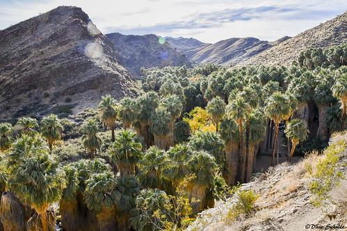 unitedstates california palmsprings palmcanyon