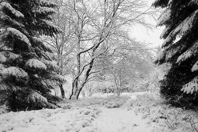 Welcome in winter wonderland