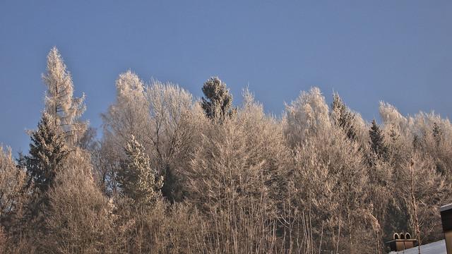 Waldspitzen