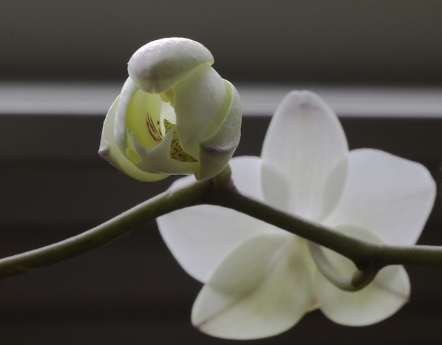 making of a bloom
