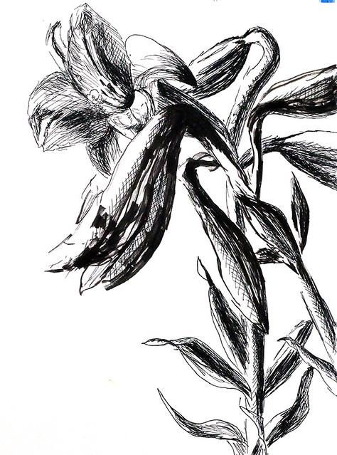 Jeden z květy výkresy květin v tužce inkoustu černé a bílé dřevěné uhlí na papíře