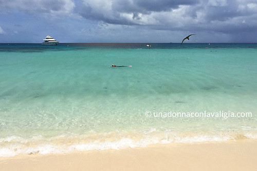 Michaelmas Cay Great Barrier reef snorkeling | by @claudiamafalda