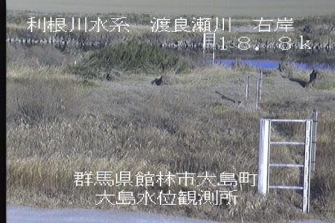 大島 ライブカメラ