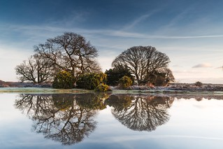 Having time to Reflect today at #Mogshadepond in the #NewForest  -1 Out here today  #Hampshire   #VisitHampshire | by matt_pinner77
