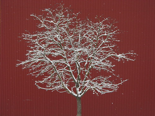 Tree_on_red_background | by ЕгорЖуравлёв