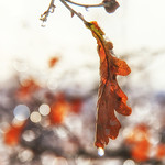 Bronze out - Leaf