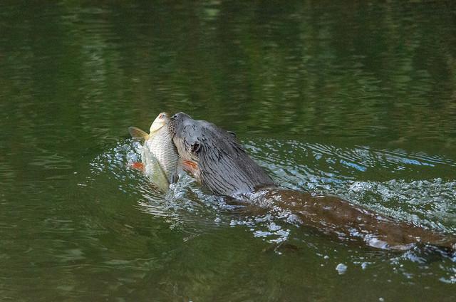 O What A Big Fish.jpg