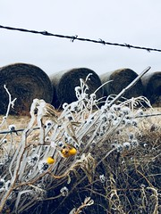 Frozen Field Fence