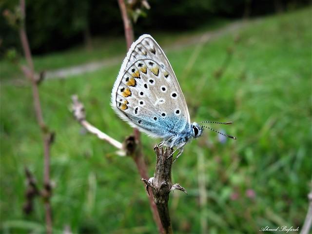 Butterfly 1540