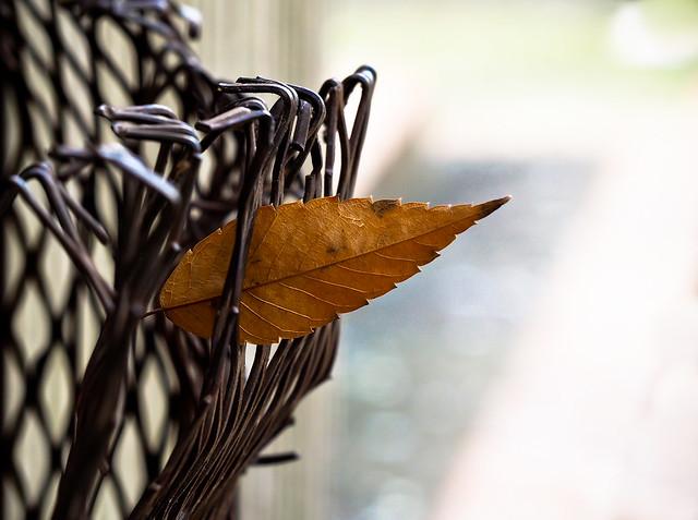 Leaf Stuck Bent Grill