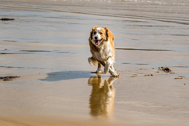 Dogs at the beach-3