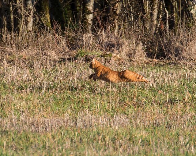 Wildcat - I'm off !