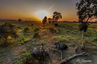 Sunset at Bagori range of the Kaziranga National Park