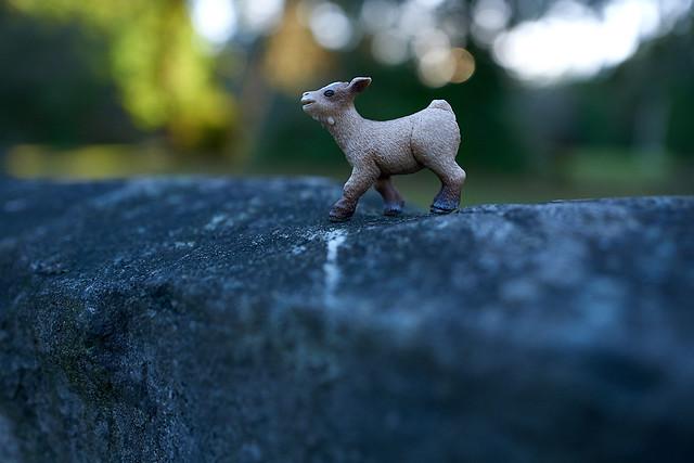 little baby goat surveys Weathertop