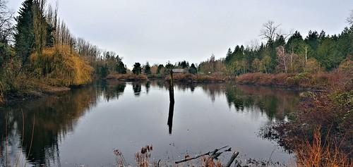nikond7000 nikkor18200mmvrlens canada britishcolumbia bc abbotsford fishtrapcreekpark wetlands reflection