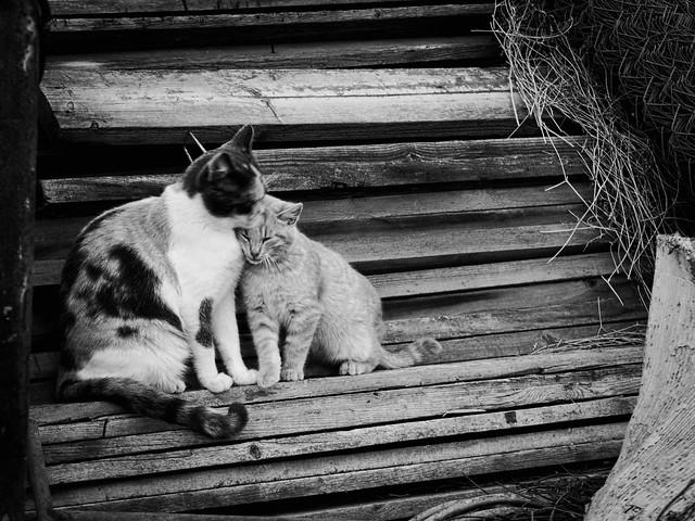3163 - Cats