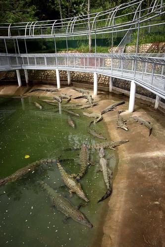 Crocodile Enclosure - Cebu Safari & Adventure Park   by eazytraveler