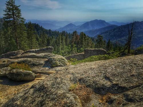 trees mountains sequoia