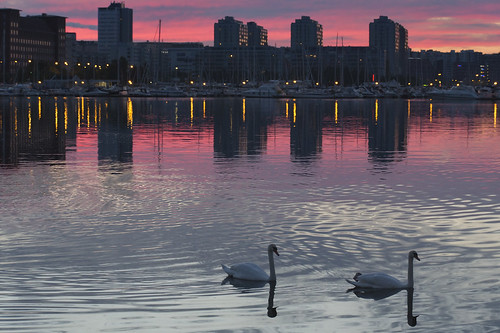 city pink sunset sea summer urban white reflection bird water birds animal silhouette night clouds swimming canon buildings suomi finland geotagged lights boat swan helsinki marine glow cityscape harbour outdoor capital swans redsky sideview scenics foreground illuminate muteswan cygnus sooc swancouple milamai