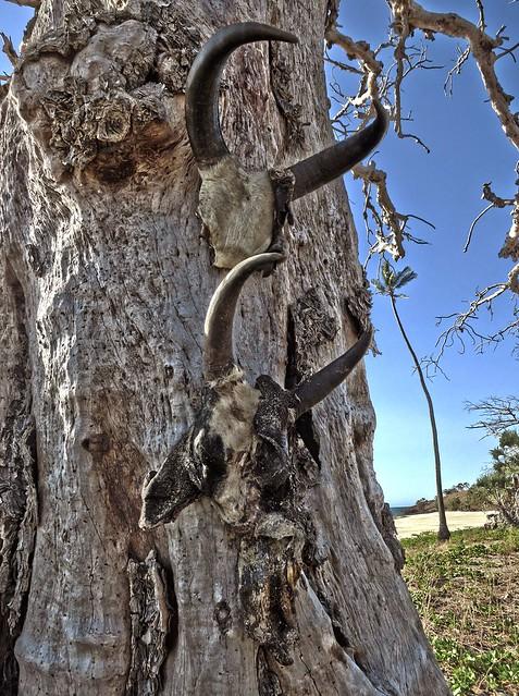Madagascar8 - 028.jpg