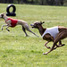 Coursing 20.4.2014 in Hoope