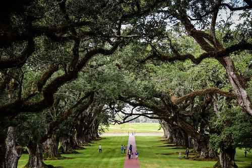 vacherie louisiana unitedstates us oak alley plantation along mississippi river la tree trees oaktree oaktrees green