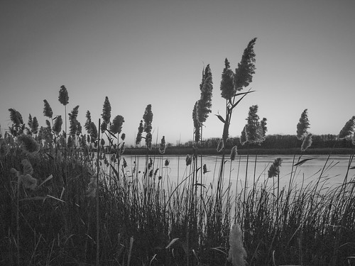 crosswinds marsh michigan scenic sunset winter ice cold water nature olympus ep2 zuiko 1250