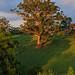 Image: Glowing Tree