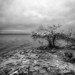 Cochina, clouds, and Mangrove