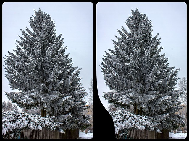 Frozen fir tree 3-D / CrossEye / Stereoscopy / HDR / Raw