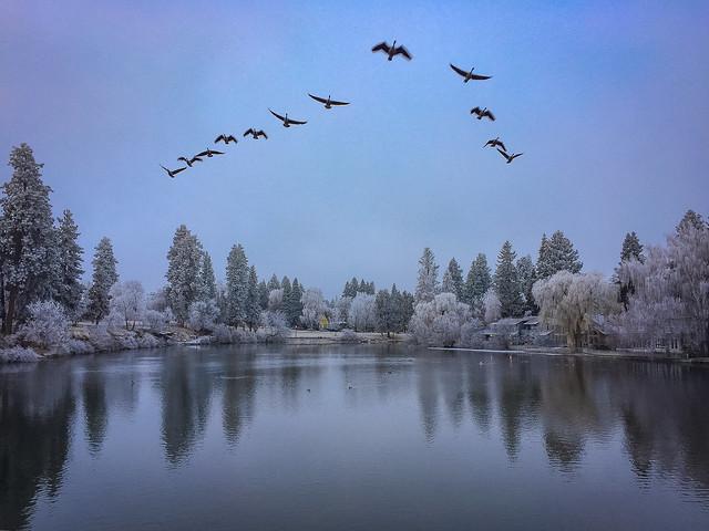 Birds on the Deschutes