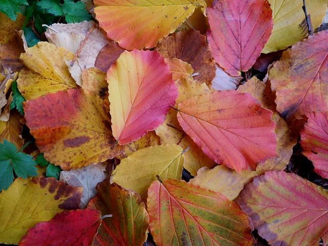 Mixed Colors by Nina