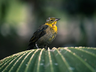 National Aviary   by trevorrichardsmusic