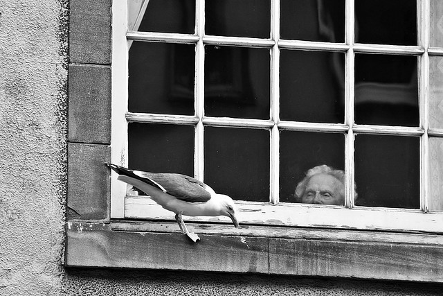 The Lady and the Seagull # 3