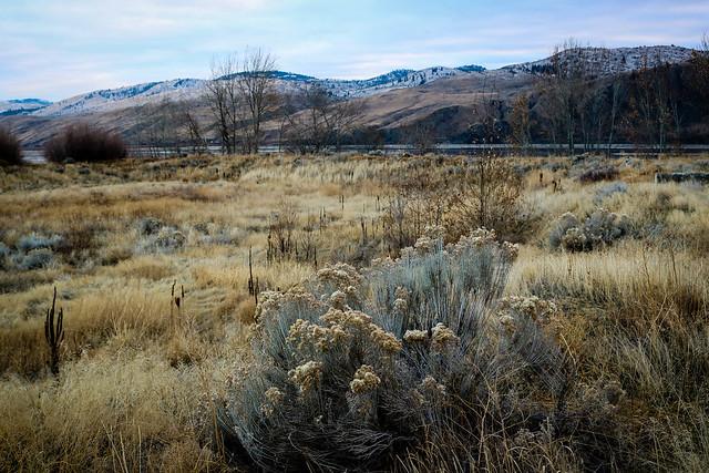 Golden grasses [Explored]
