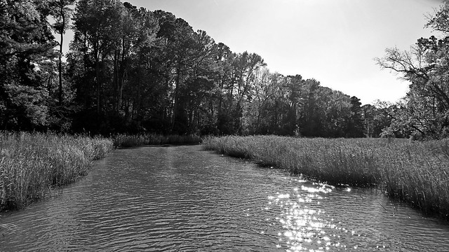 Marsh at Forest's Edge