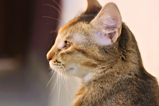 Cat Enjoying sunset   by Rusafy