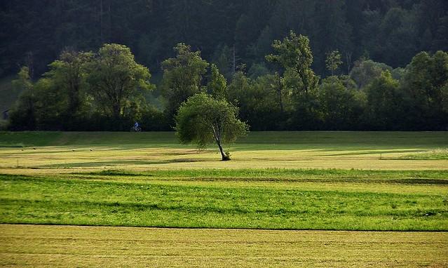 Allgäu, Oberstdorf,   Wiesen und Bäume, 76127/9430