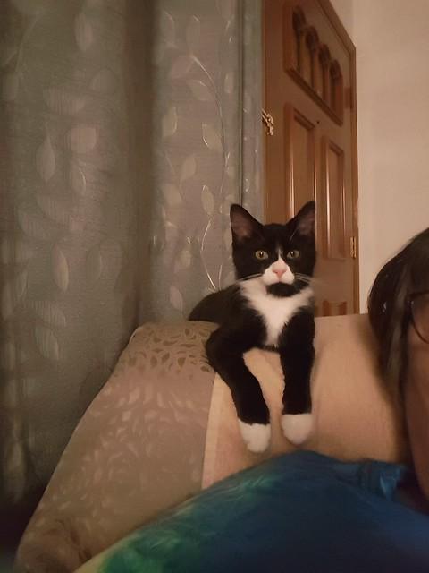 Nori watching TV